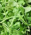 Fresh Arugula herb leaves ready for salad or garnish.